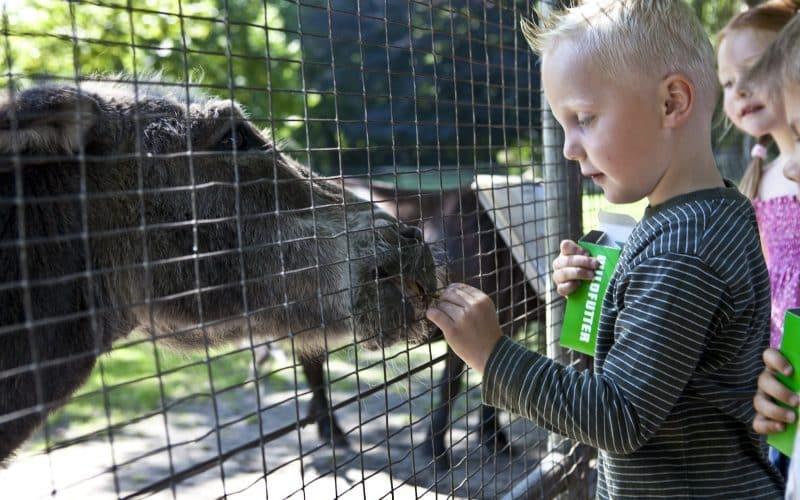 © Hartmut Springer, Tiere füttern im Gronauer Stadtpark