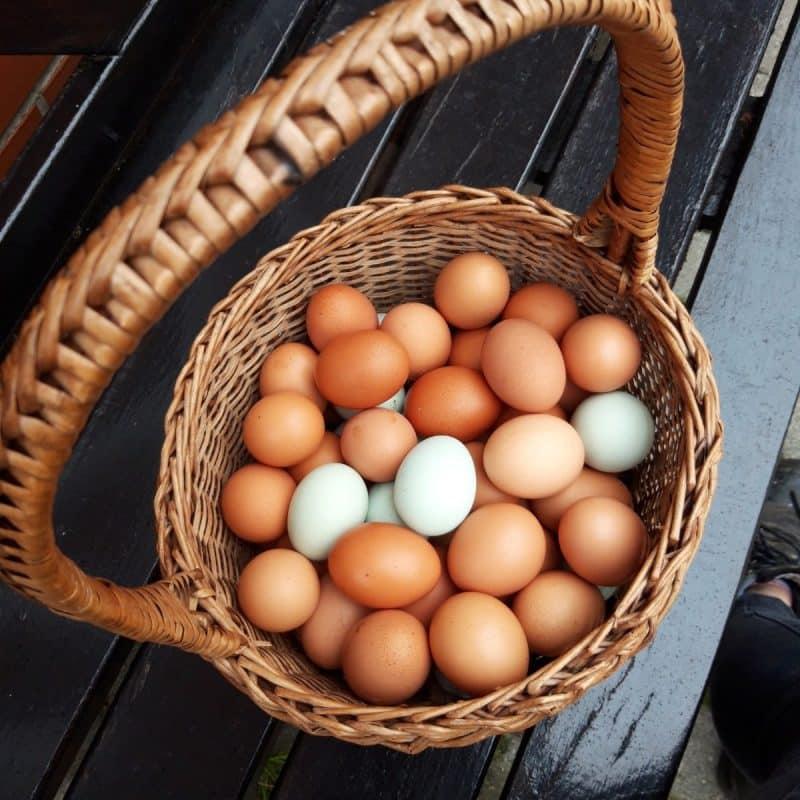 Eier vom Hof Meyer